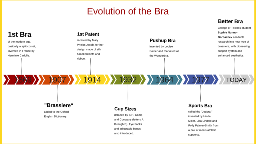 Timeline of the evolution of the bra