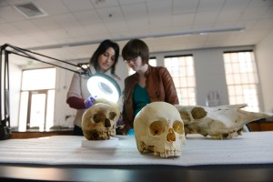 Two human skulls and a cow skull sit on a black table while two students examine a third human skull under a light