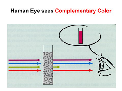 Diagram - Human Eye Sees Complementary Color