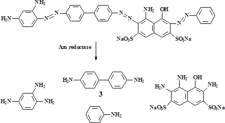 Metabolic cleavage of an azo dye to the corresponding arylamines